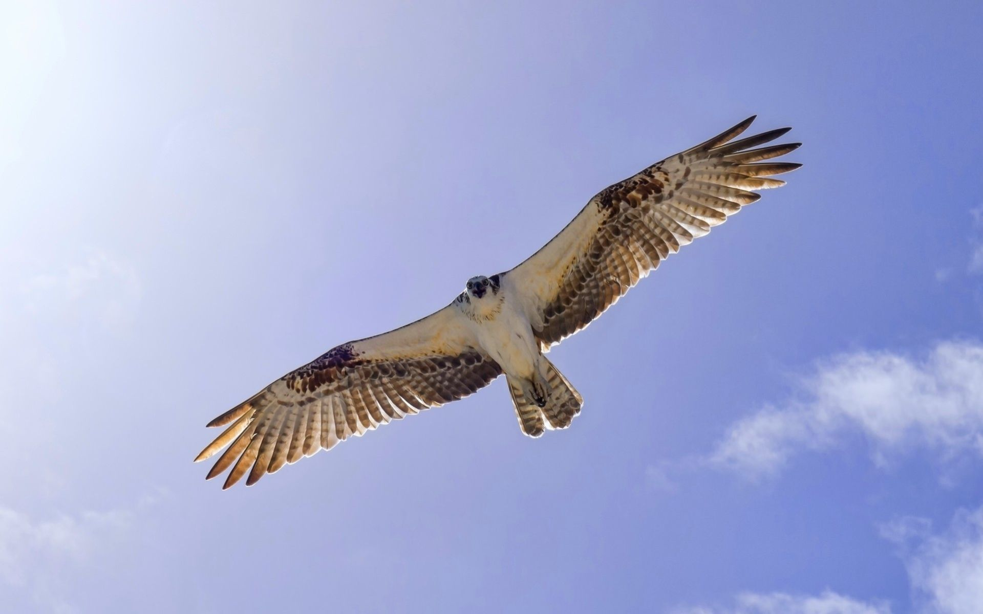 сокол в небе фото летучая действительно парит