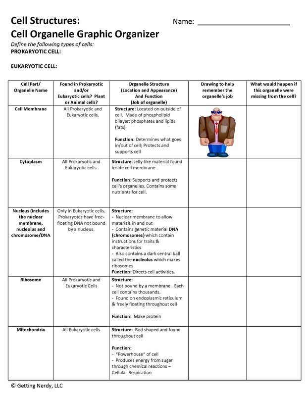 Cell organelle graphic organizer differentiated for various – Cell Structures and Organelles Worksheet