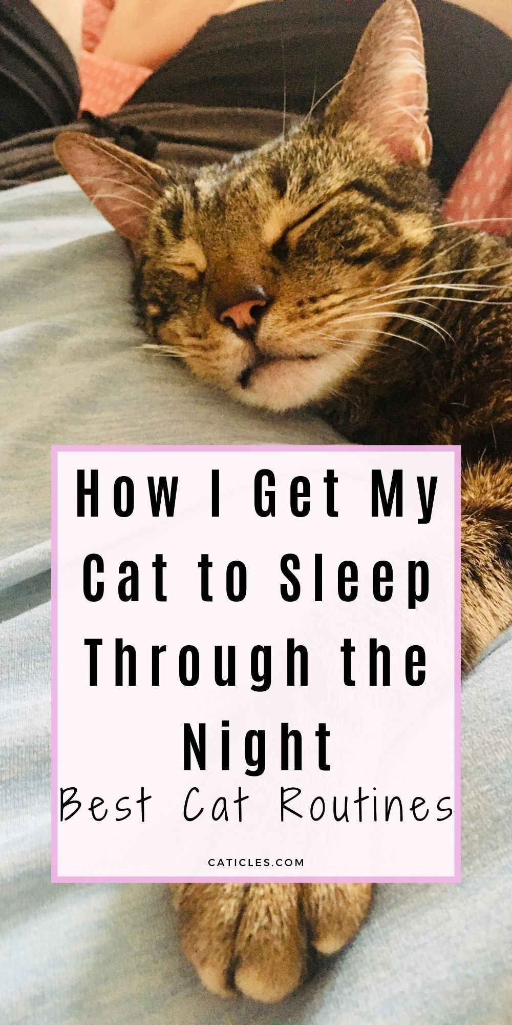Cat Rituals That Stop Your Cat From Waking You At 3 Am Caticles In 2020 Cat Keeps Meowing Cat Essentials Cat Care