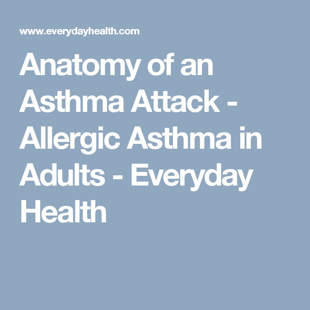 Anatomy Of An Asthma Attack Allergic Asthma In Adults Everyday