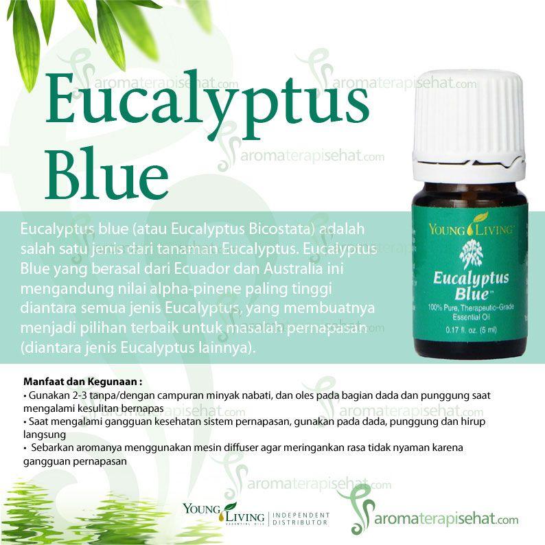 10 Manfaat Minyak Eucalyptus yang Wajib Kamu Tahu!