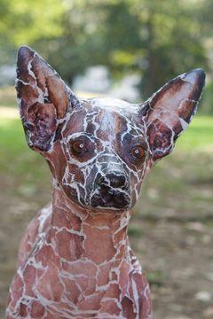 tuco the xolo   Xoloitzcuintli   Mexican hairless dog