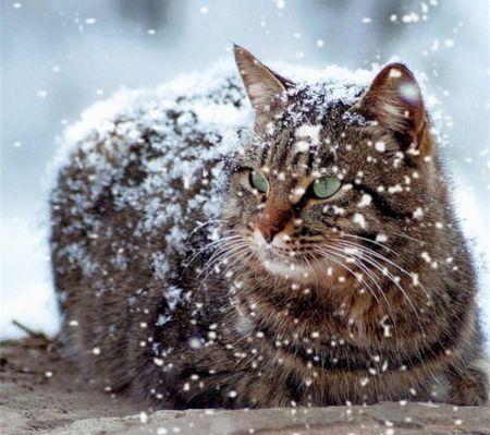 Winter Cat Desktop Nexus Wallpapers Winter Cat Cats Free Cats