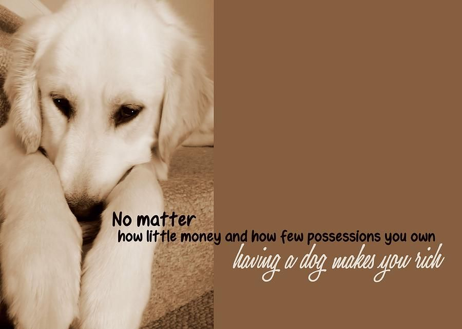 Puppy Dawg Quote Photograph