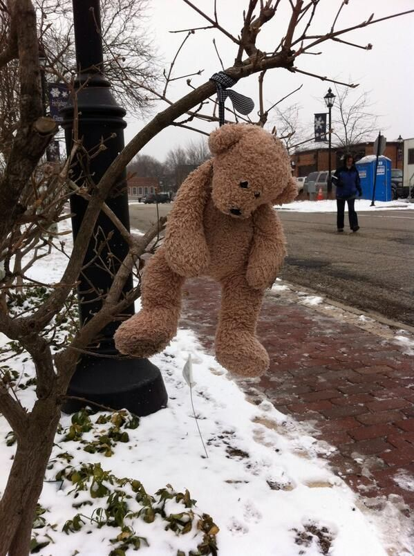 FOUND in GLENCOE, ILLINOIS This teddy bear was spotted out
