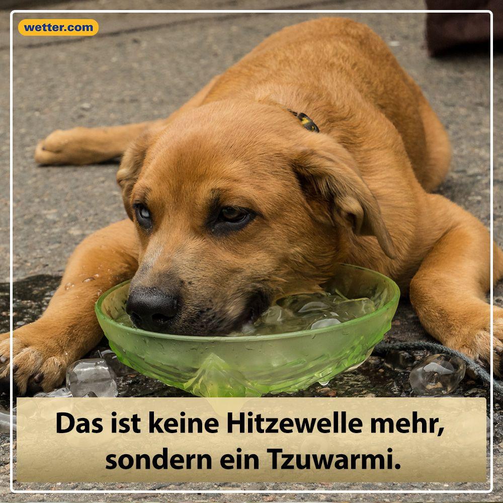 Spruch des Tages! #hitze #hitzewelle #spruch #lustig # ...