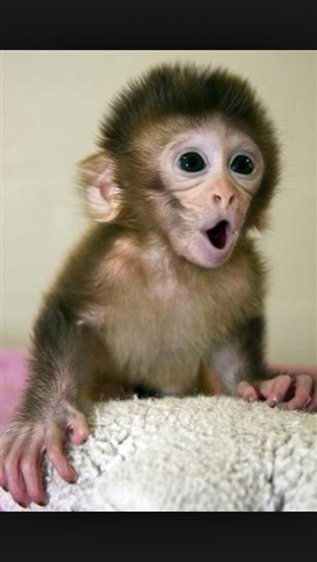 The Monkeys That Prove Babies Can Be Born To Three Parents