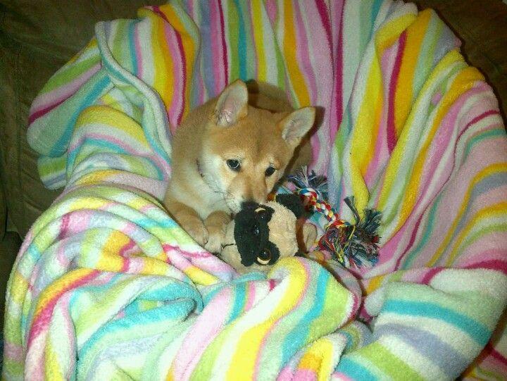 This is my baby girl Kiwi