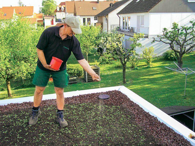 Dachbegrunung Anlage Pflege Und Kosten In 2020 Dachbegrunung Flachdach Begrunung Dach