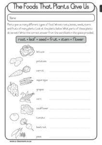 caps grade3 lifeskills term4 plants food that plants give us term 4 classroom education plants. Black Bedroom Furniture Sets. Home Design Ideas
