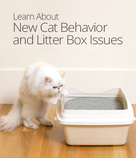 In this lesson, Arloa of Cat Chat provides some tips to