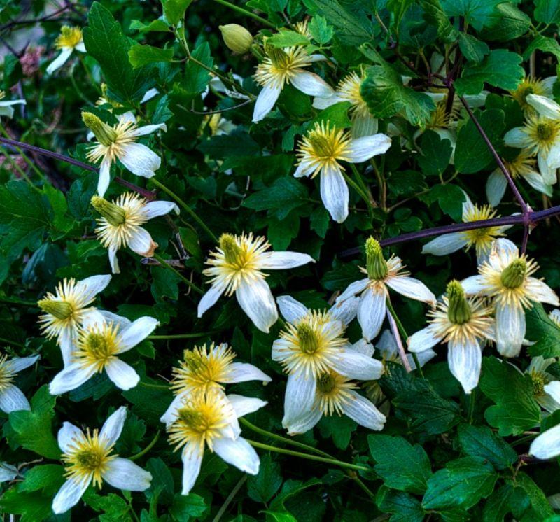 Flowers of Sierra Nevada. Комментарии