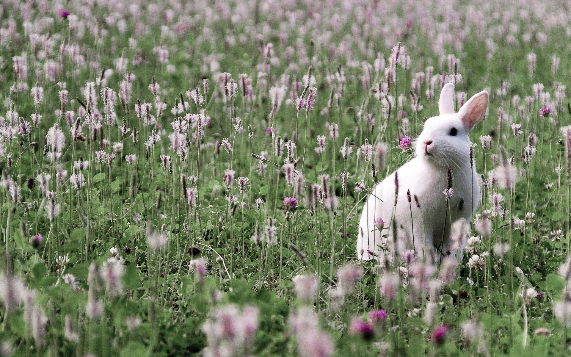field, grass, flower, rabbit, hare, animals | Free HD wallpapers