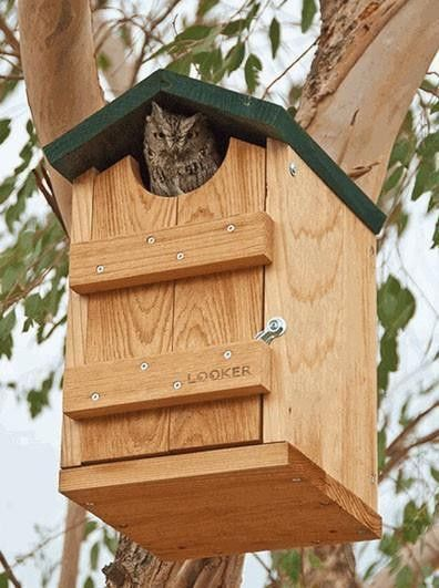 screech owl house owl house kestrel and green roofs