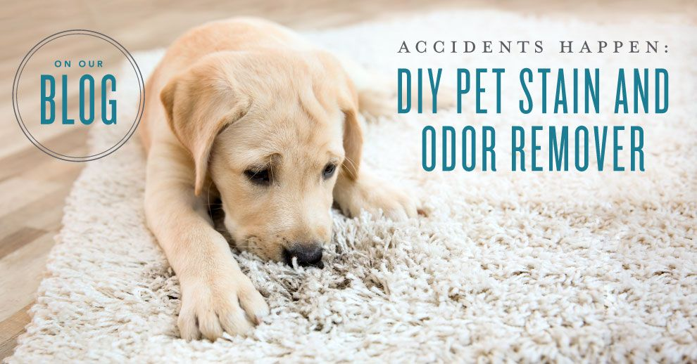 Diy Pet Stain Odor Remover Stain Remover Carpet Diy Stuffed Animals Pet Stains