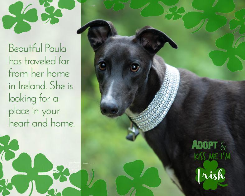 Adopt Dog Volunteer Work On Behance Dog Adoption Adoption Dogs