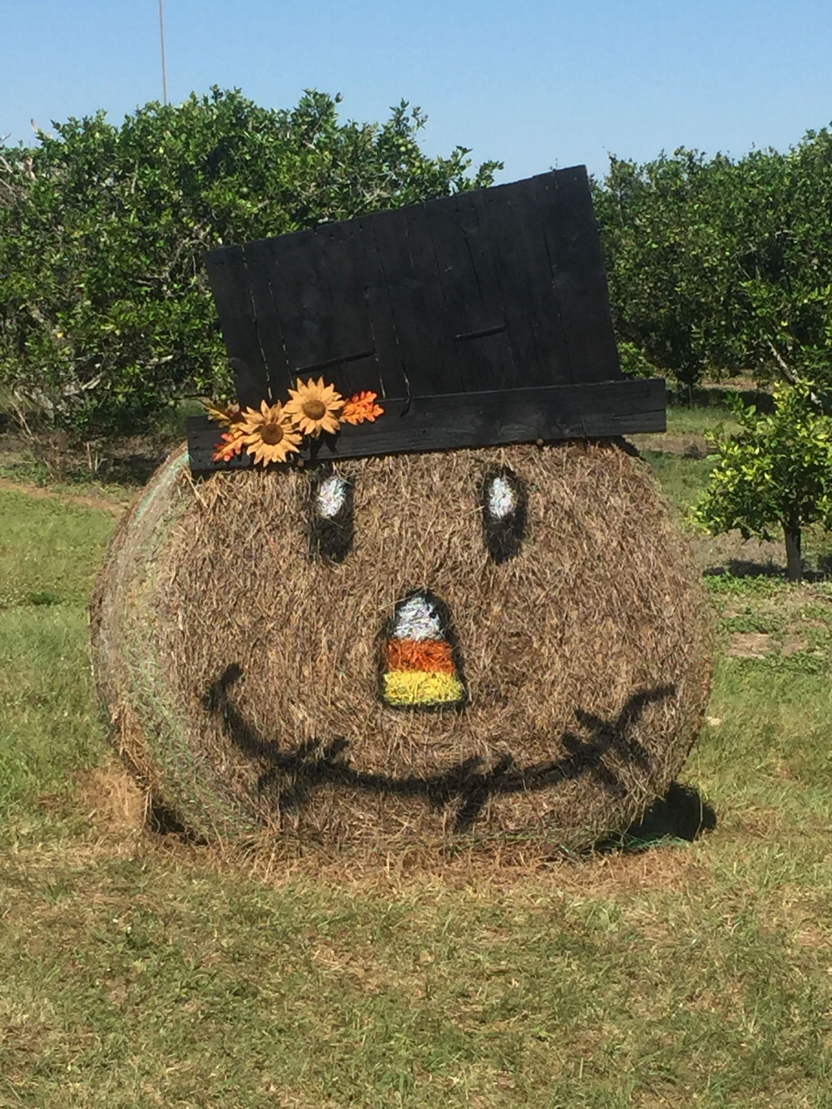 Mr Scarecrow From A Round Hay Bale Fall Ideas Halloween Hay