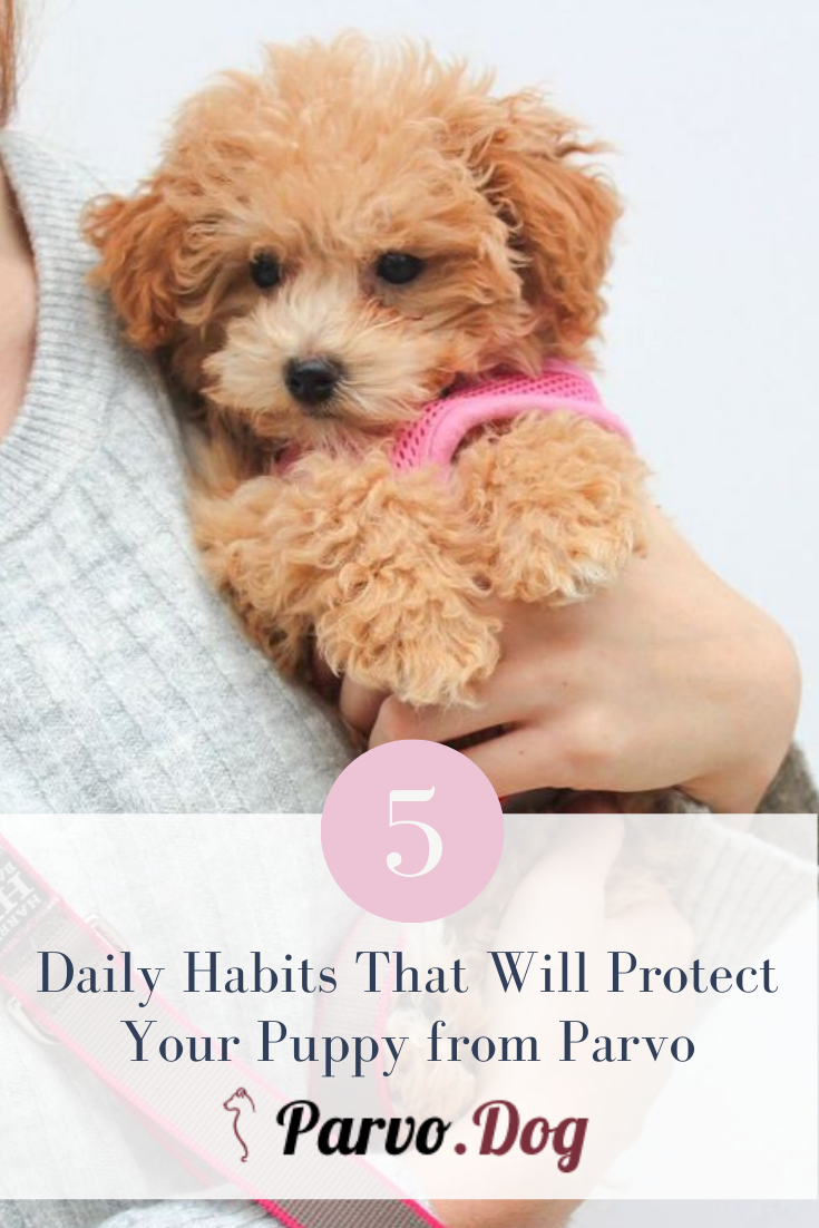 The Best Way To Protect Your Puppy From Parvo Is To Get Them Vaccinated However If You Just Brought A New Puppy Home Or Are Daily Habits Fur Babies New Puppy