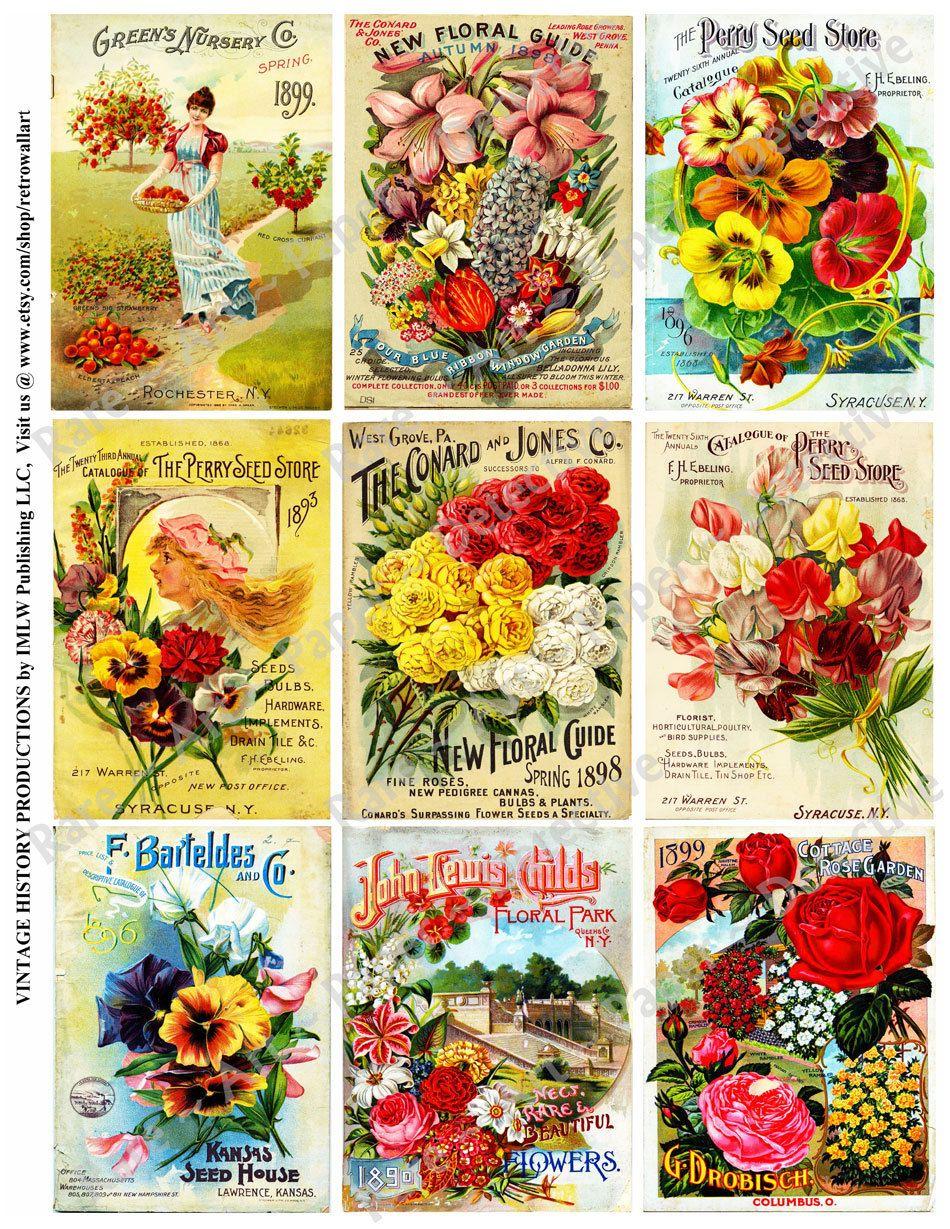 Ornamental Flowering Plants,… | Clip Art - Farm Country & Seed ...