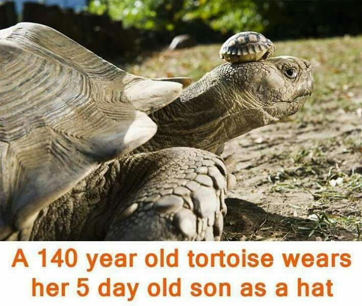 Tortoise and baby