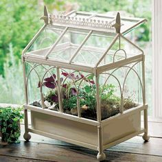 Captivating Terrarium Greenhouse   Google Search