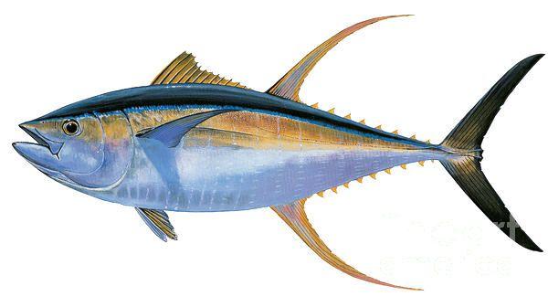 Yellowfin Tuna Painting by Carey Chen - Yellowfin Tuna Fine Art ...