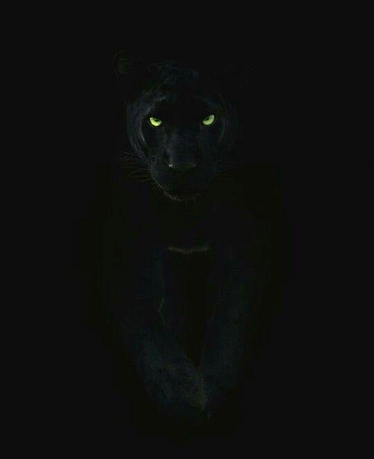 Pin By Anita Glause On Big Cat Art Black Panther Cat Panther Cat Jaguar Animal