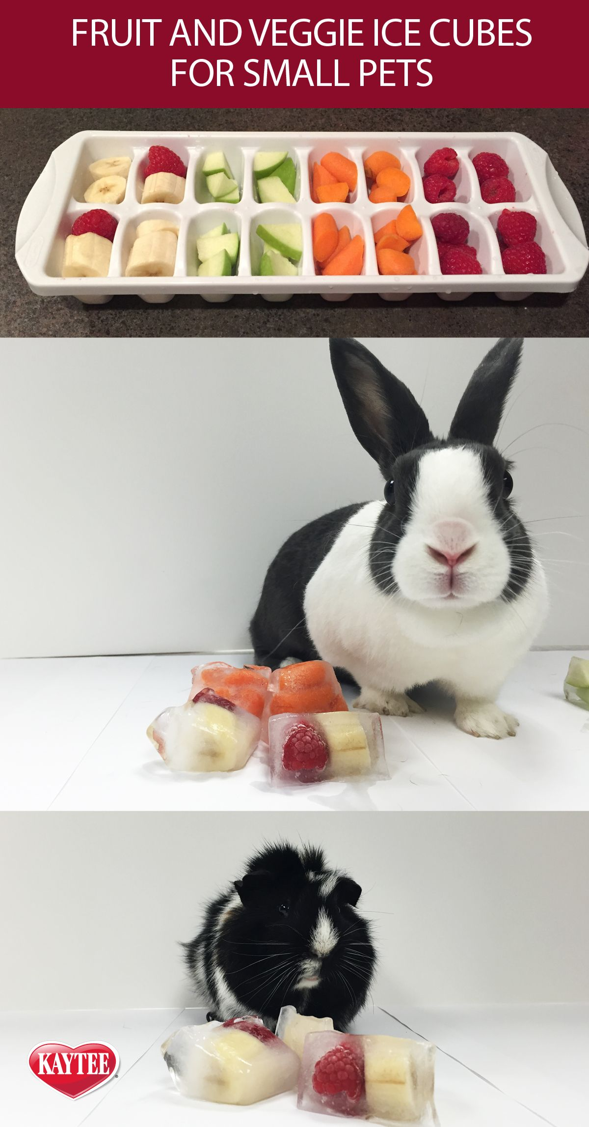 M s de 25 ideas incre bles sobre juguetes para cobayas en pinterest juguetes para hamster - Juguetes caseros para conejos ...