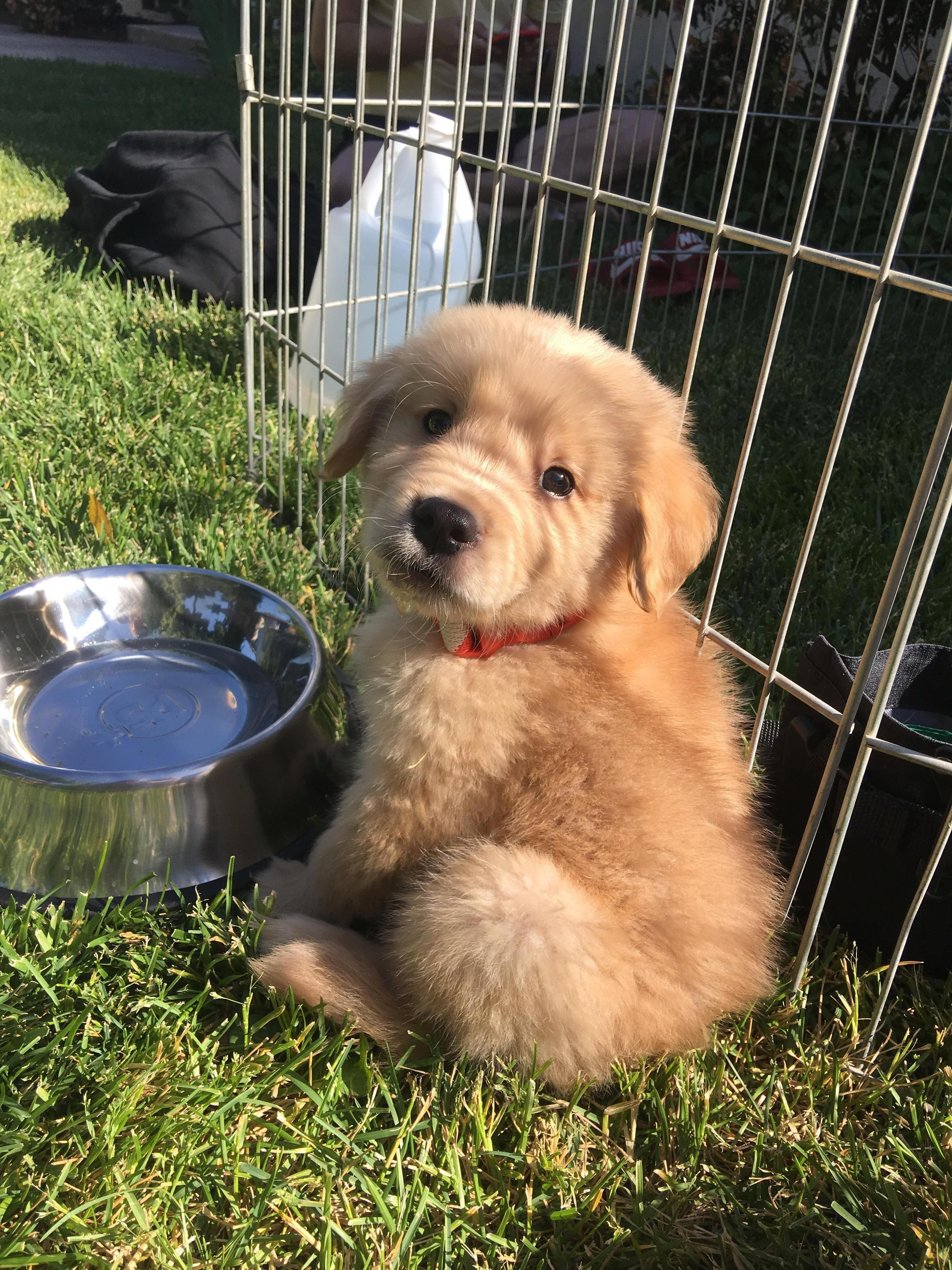 Find Out Even More Relevant Information On Golden Retrievers