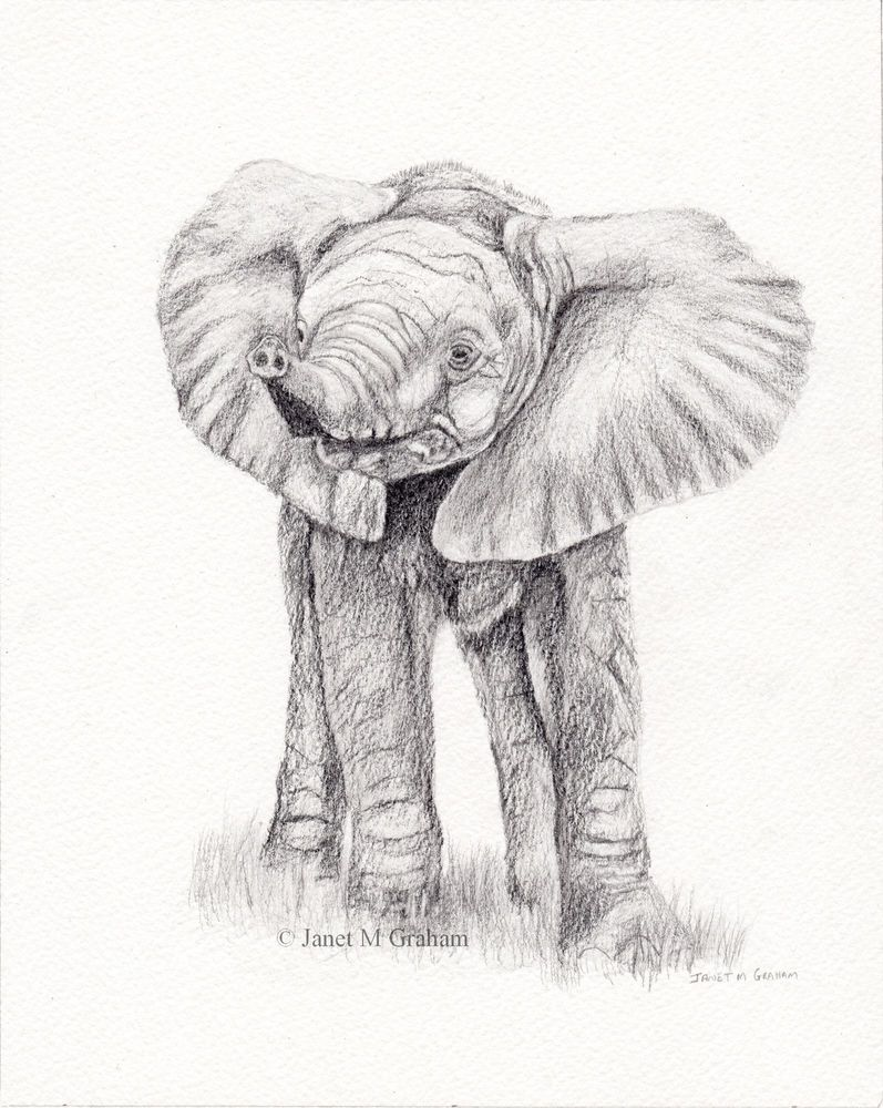 Baby elephant african elephant original animal wildlife pencil drawing