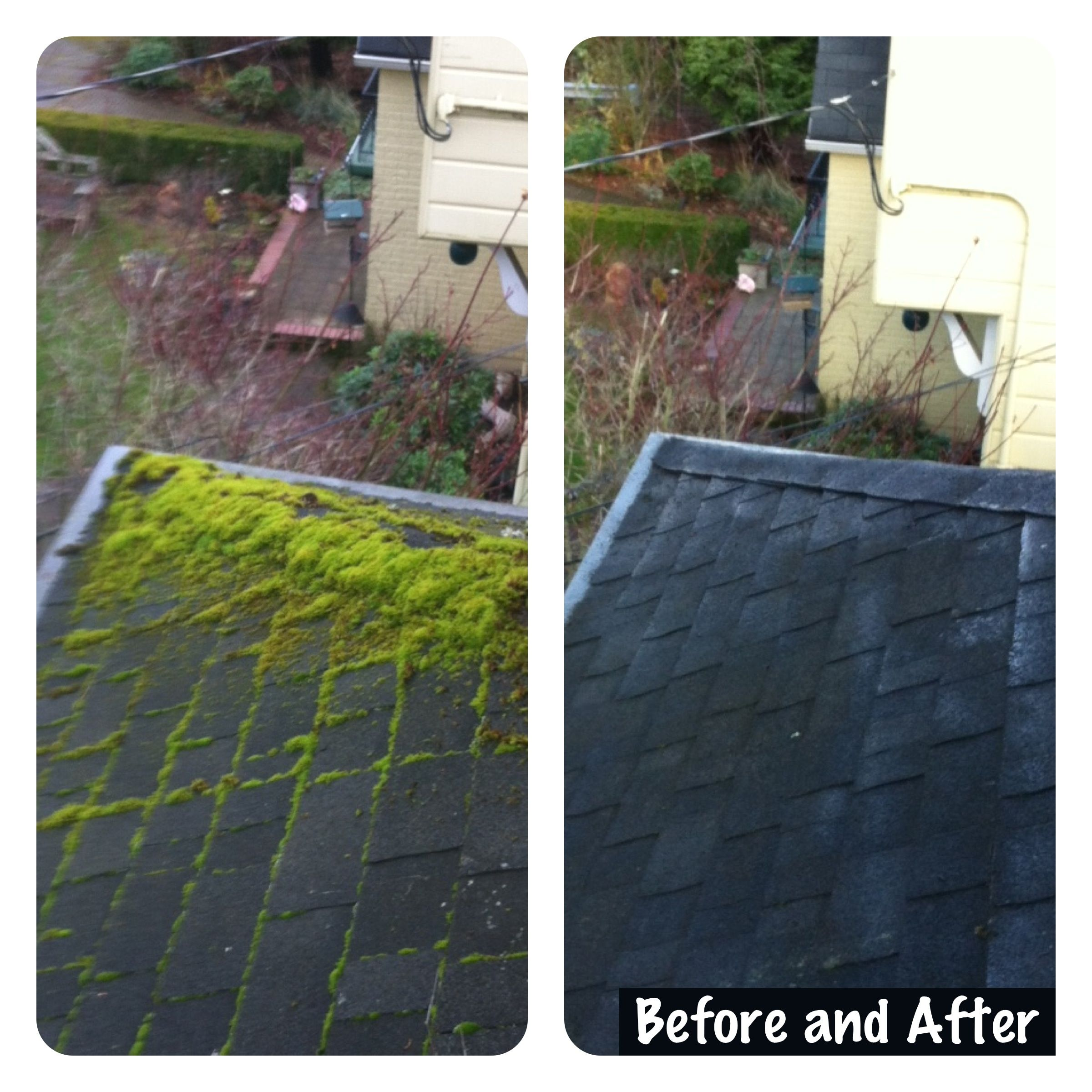Moss Removal And Gutter Cleaning In Portland 503 703 5358 Cleaning Gutters Moss Removal Cleaning