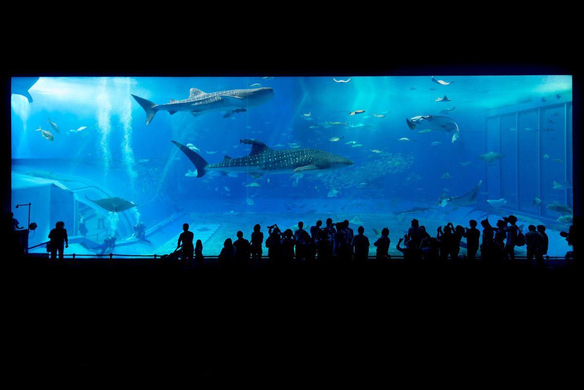Hammerheads & Whale Sharks Becoming Extinct   Sea aquarium ...