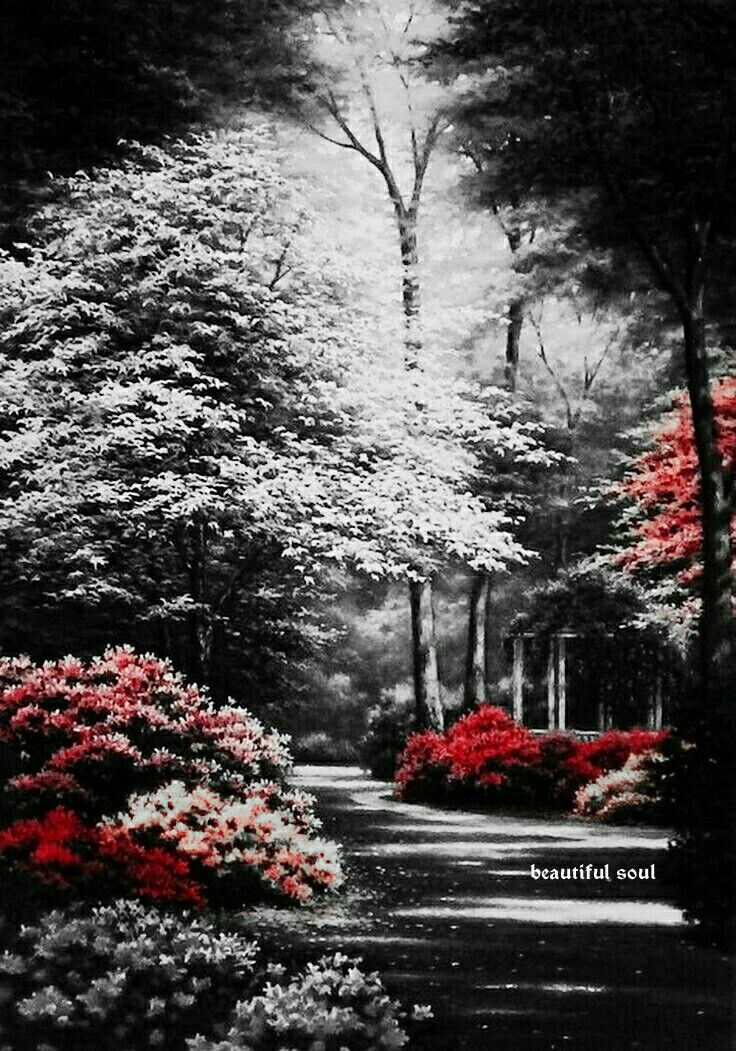 Landscape Nature Photography Black And White
