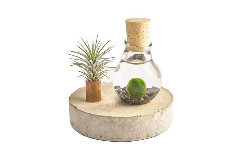 Acuario mini accesorios y decoraci n para el hogar for Accesorios decoracion hogar