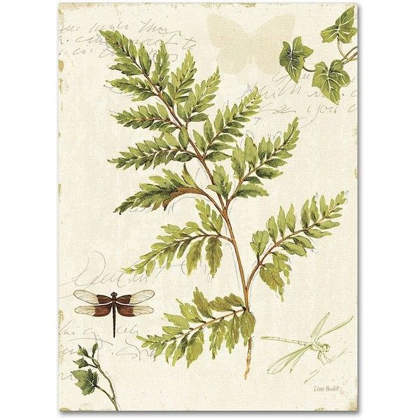 Trademark Fine Art Ivies and Ferns I Canvas Wall Art ($56) ❤ liked ...