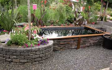Koi Pond At Russell Watergardens Koi Flagship Store In Redmond Washington Description And