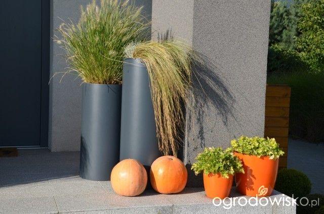 Ogród tworzę nowoczesny czyli wewnętrzna walka jak nie zostać kokoszką :) - strona 1129 - Forum ogrodnicze - Ogrodowisko