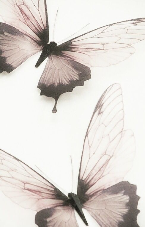 Splash of Pink - pink, gray, butterflies