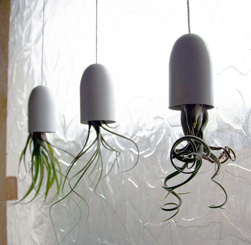 DIY airplant containers - last one looks like an octopus hiding from the  authorities.