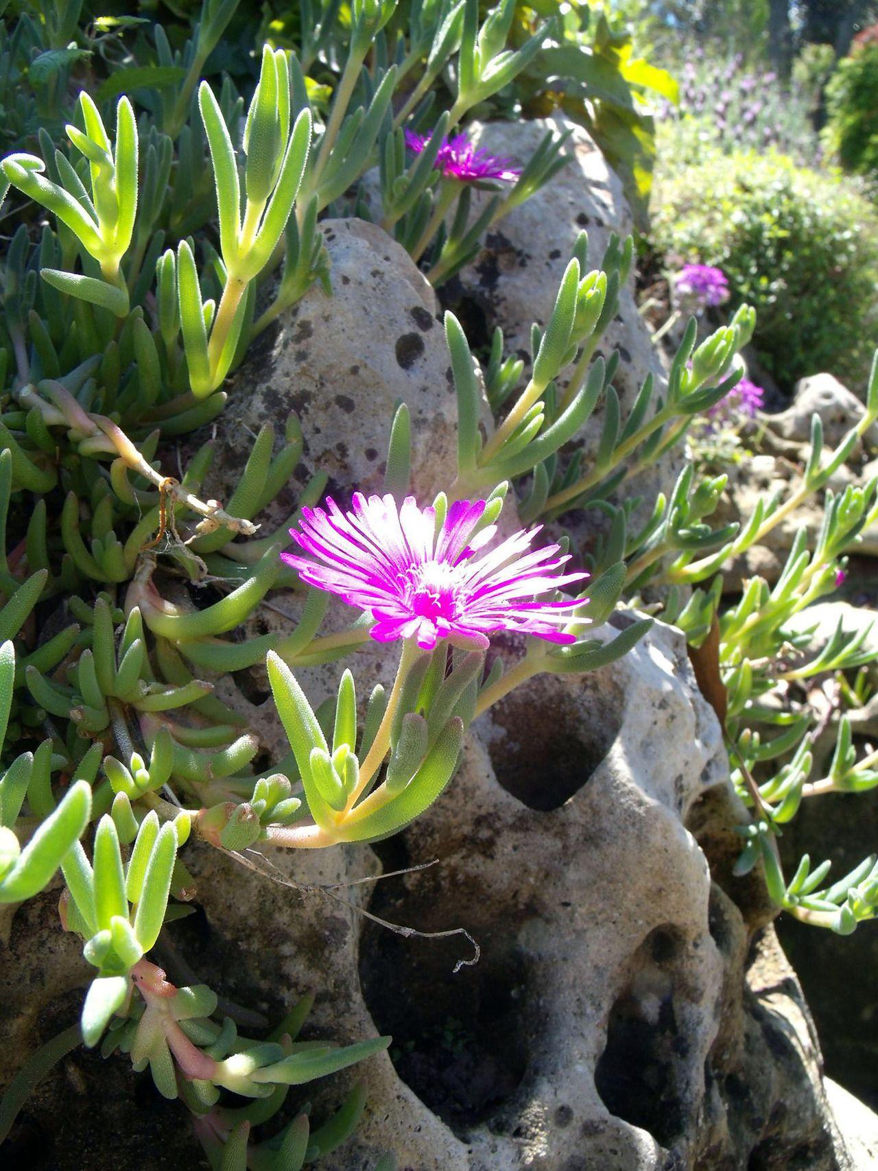 Purple Flower Dallas Arboretum and Botanical Gardens