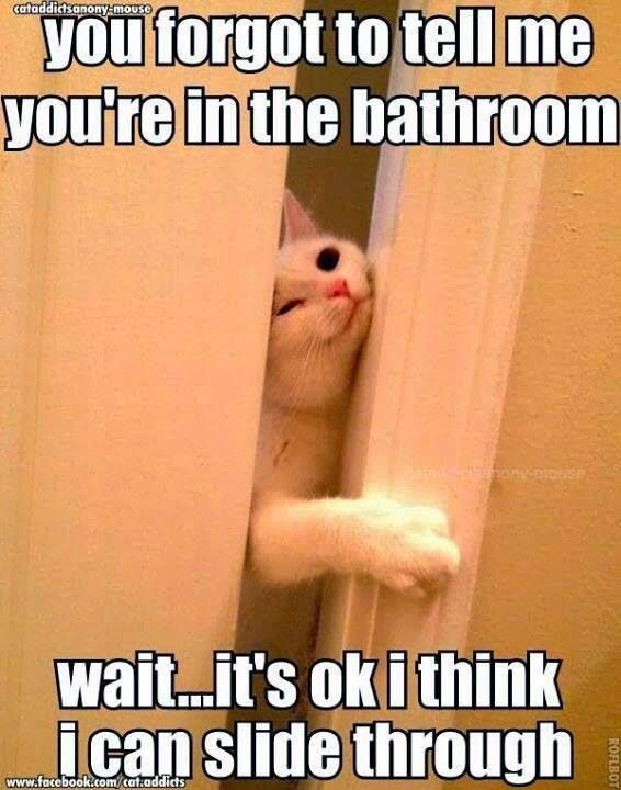 Funny Cat Bathroom Quote Funny Animal Memes Funny Cats Funny