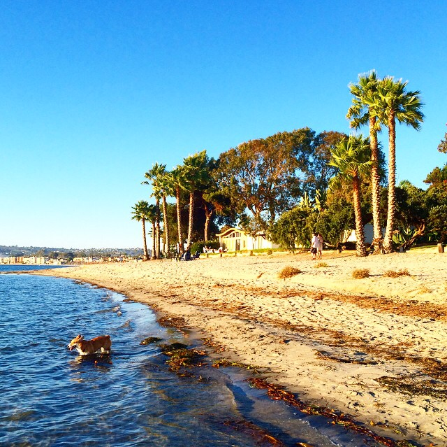 Paradise Point A Pet Friendly Hotel In San Diego Ca Outdoor Recreation Activities Pet Friendly Hotels Places To Go