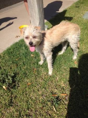 Found Terrier Mix Blonde Hair 32nd St Sweetwater Image 1image