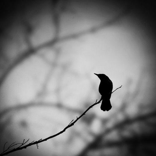Always Something Better Bird Silhouette Bird Photography Photography
