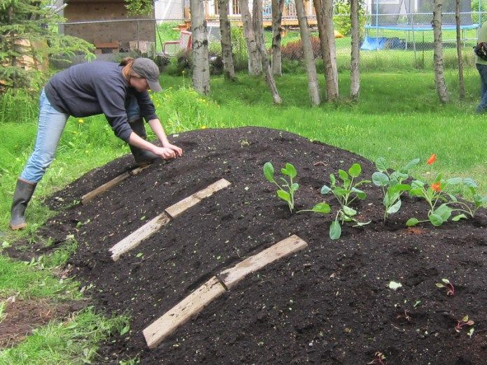Permaculture les buttes de culture une v ritable r volution jardin for Culture sur butte permaculture