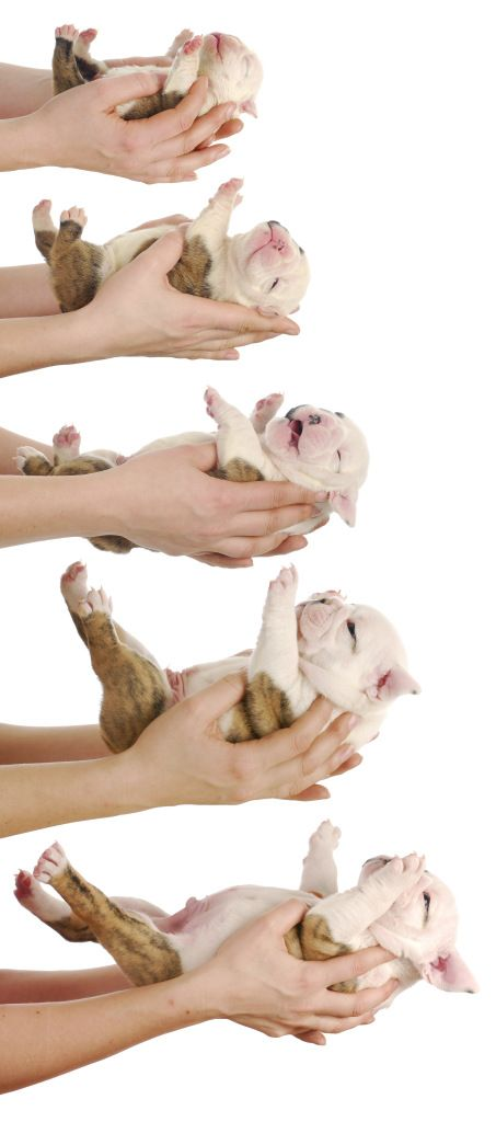 My My How You Ve Grown Puppy Development Puppy Stages