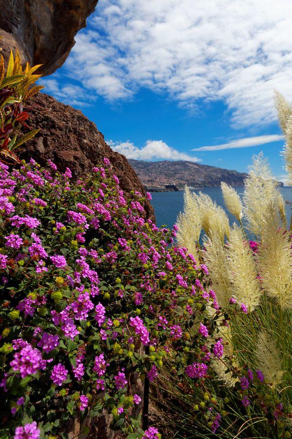 Madeira colors, Portugal  http://www.travelandtransitions.com/destinations/destination-advice/europe/madeira-portugal/