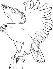 Coloring Pages Flying Birds Falcon Bird Coloring Page Wild Bird