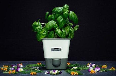 Cole Mason Self Watering Planter Self Watering Herb 400 x 300