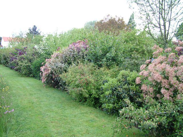 Haie libre nabirat pinterest google and gardens - Haie persistant fleurie ...